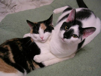 Mya and Max, two housecats.