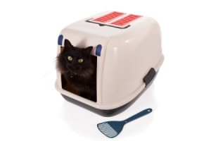 Black cat in a litter box.