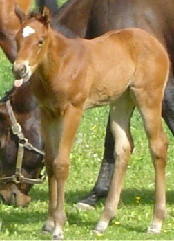 Young filly