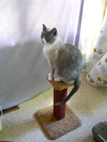 Numi on a pedestal.