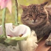 A cat sitting by a basket full of flower pedals for a wedding.
