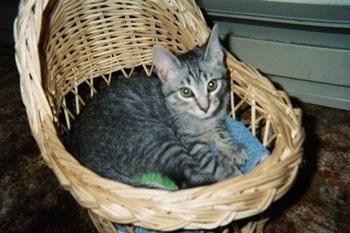 Kitten photo.