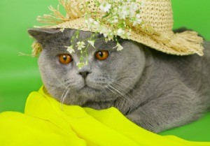 A cat wearing a straw hat.