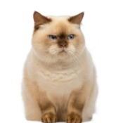 Cat's Body Language