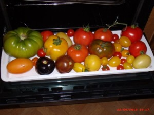 White tray with a variety of tomatoes.