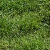 A photo of a grass lawn.