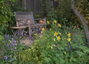 Shady Woodland Garden