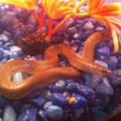 Snake in aquarium.