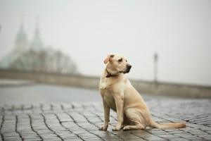 A lost dog standing in a road.