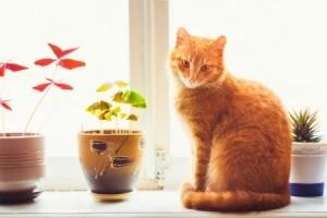 An orange cat sitting on a window sill.