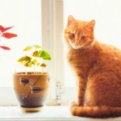 An orange cat sitting on a window sill.