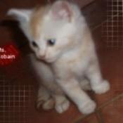 White and orange kitten.