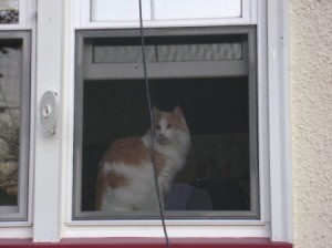 Orange and white cat in window.
