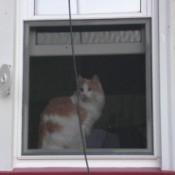 Orange and white cat in window.