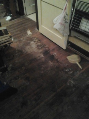 Removing Pet Urine Stains From Hardwood Floors Thriftyfun