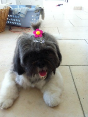 Dog with flower in his hair.