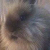 A fuzzy bunny.