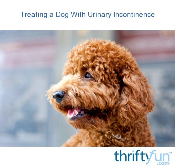 Canine Urinary Incontinence Natural Treatment