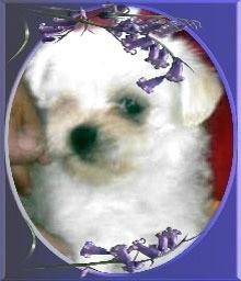 Casper's photo on card.