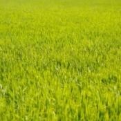 Nice green grass lawn.