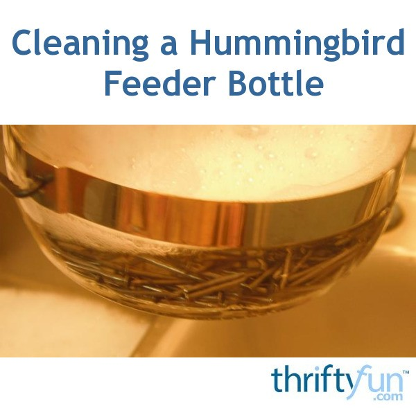 Cleaning A Hummingbird Feeder Bottle Thriftyfun