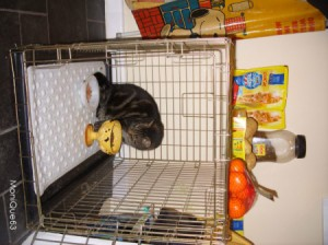 Bath Mat Inside Pet Travel Cages - cat in large cage with mat on the floor