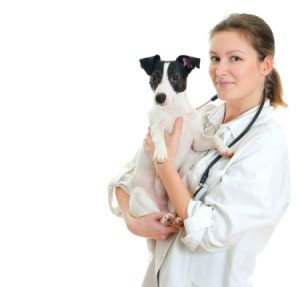 veterinarian holding a dog