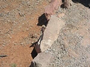 Downward shot of lizard on rock face.