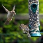 Birdfeeder Bullies
