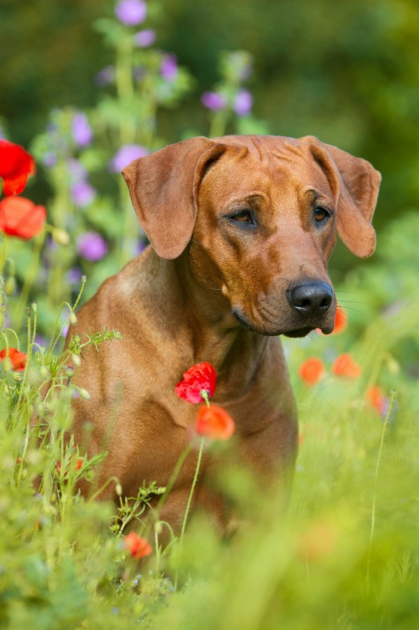 Best Mixed Breed Dogs To Own