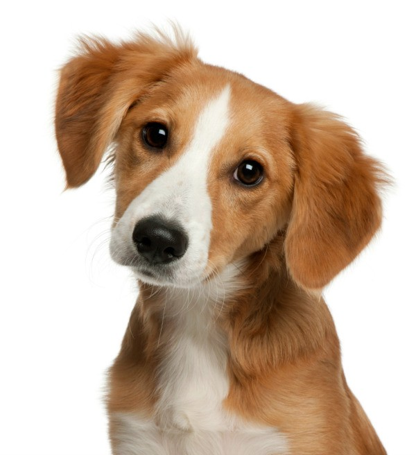 Can A Vet Determine Dog Breed