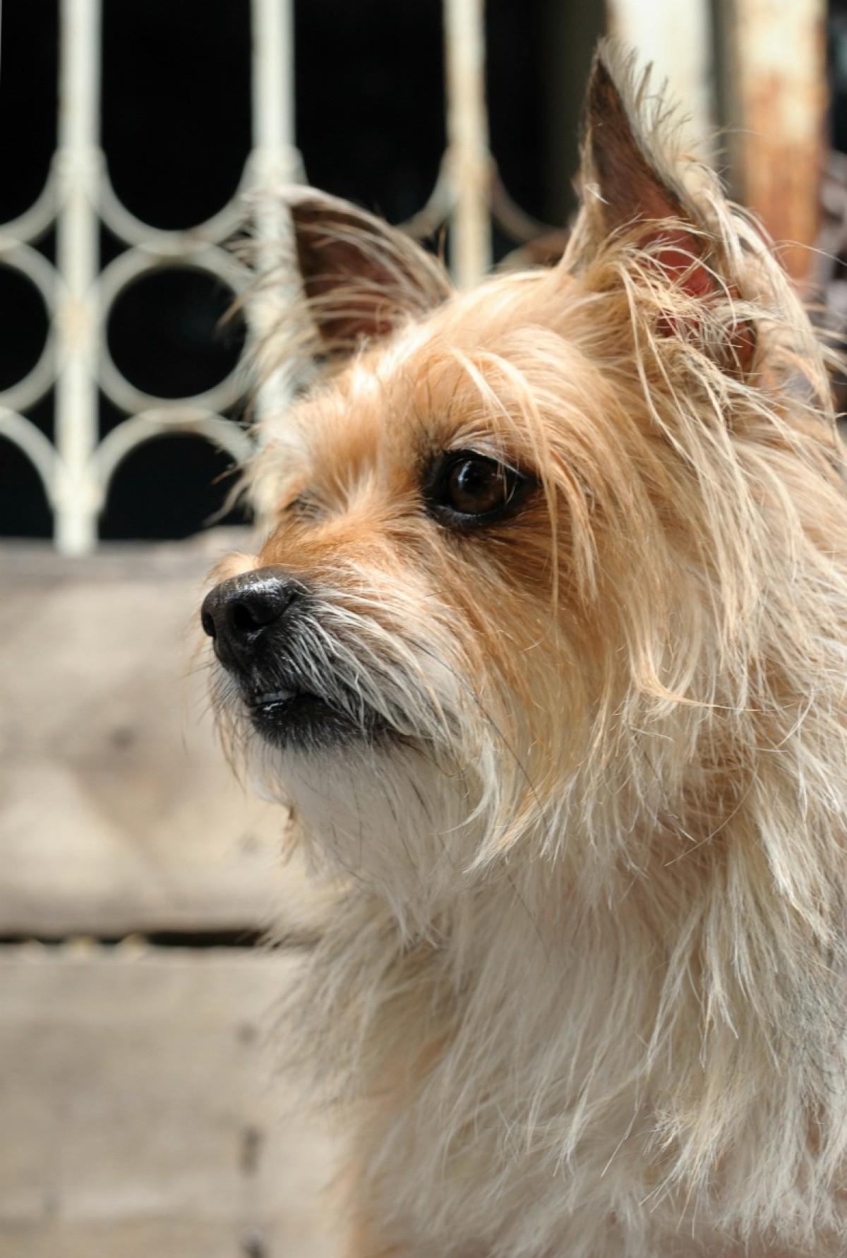 Terrier Mix Photos Thriftyfun