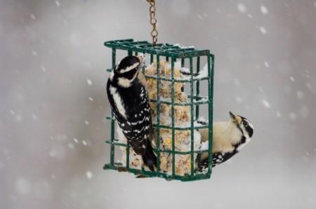 Winter Birdfeeder