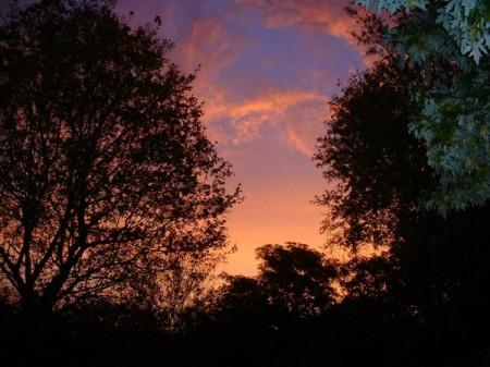 October Sunrise From My Garden