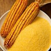 Corn Meal