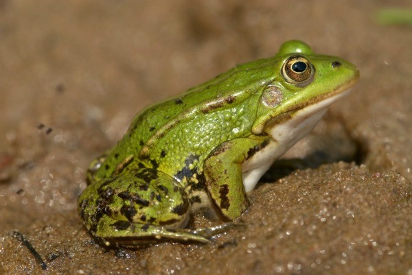 Preventing frogs from laying eggs in a pool thriftyfun The frog in the swimming pool poem answers