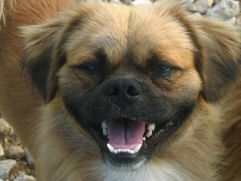Closeup of dog's face.