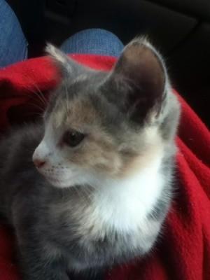 Closeup of kitten.