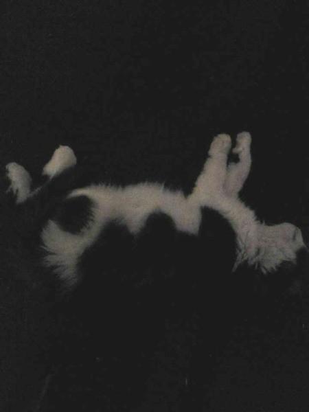Black and white cat.
