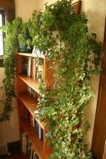 Bathe them in light, plants on bookshelves