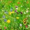 A field of wildflowers.