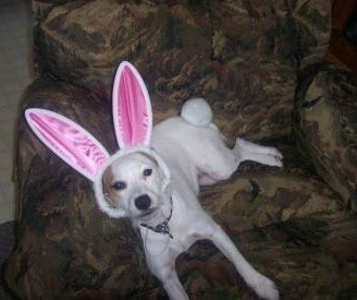Dog in bunny ears.
