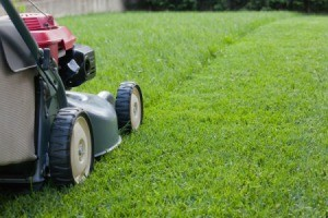 A lawn mower mowing the grass.