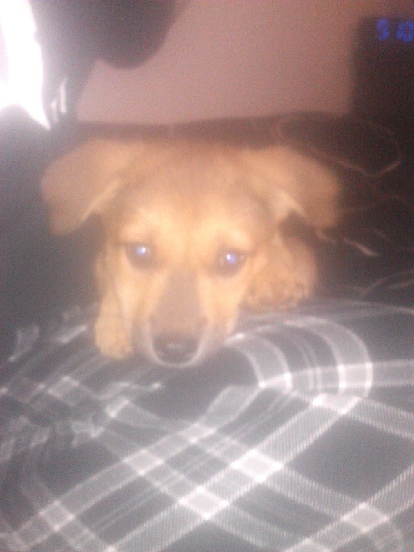Fuzzy photo of puppy's face.