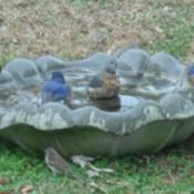 Several birds on bird bath placed on the ground.