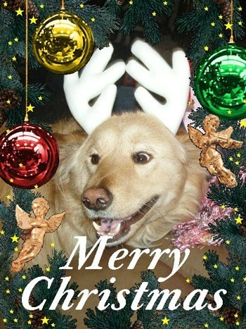 Lucy with reindeer antlers on Christmas card.