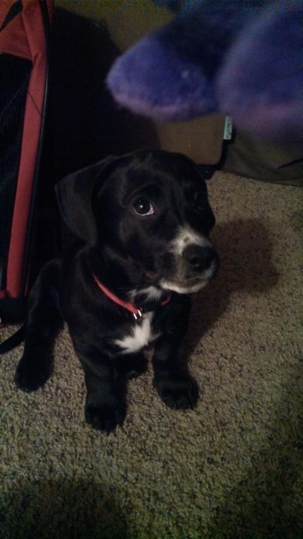 Rather dark photo of puppy.