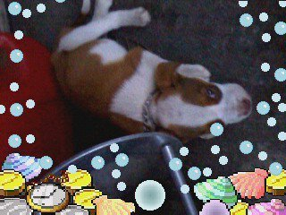 Diesel on the floor with decorative border on photo.