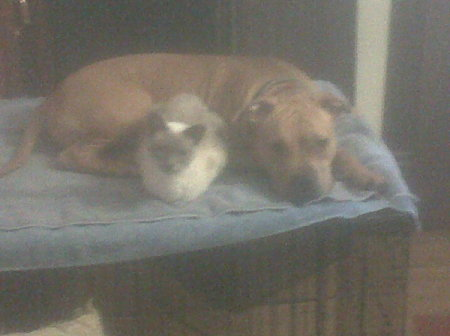 Dog and cat laying on bed