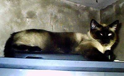 Cat laying on shelf.